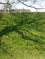 Tree shadow, crossing into Teesdale